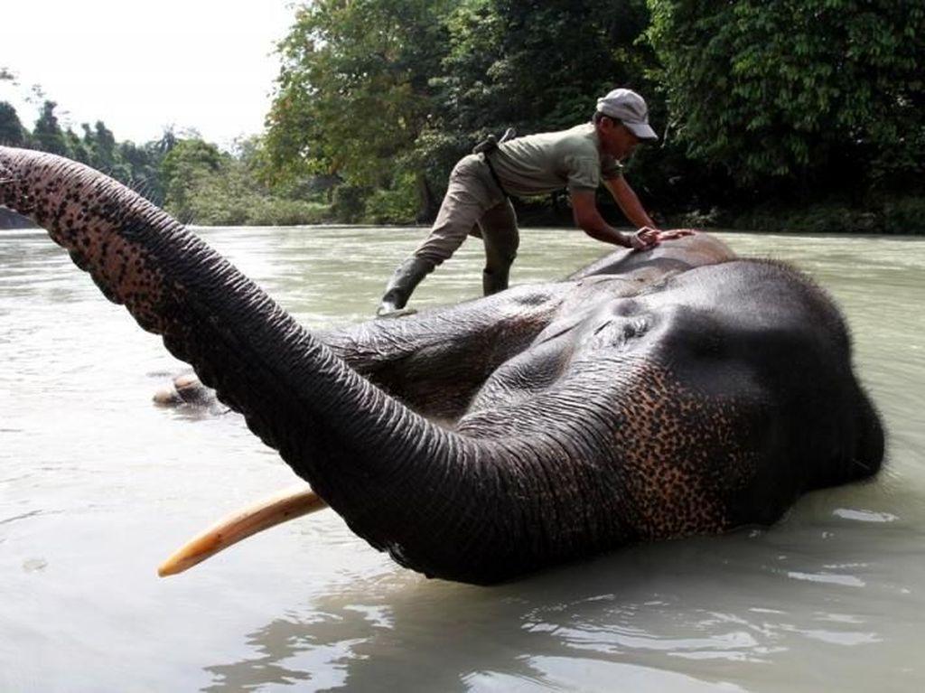 Tempat Memandikan Gajah di Sumatera Utara