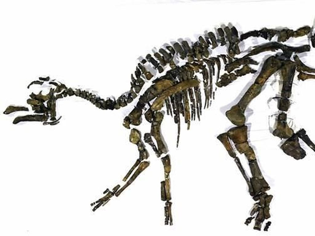 Ilmuwan Jepang Temukan Spesies Baru Dinosaurus Langka
