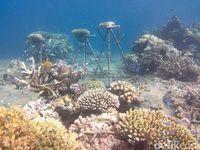 Dahulu Rusak, Kini Bawah Laut Calabai di NTB Memesona