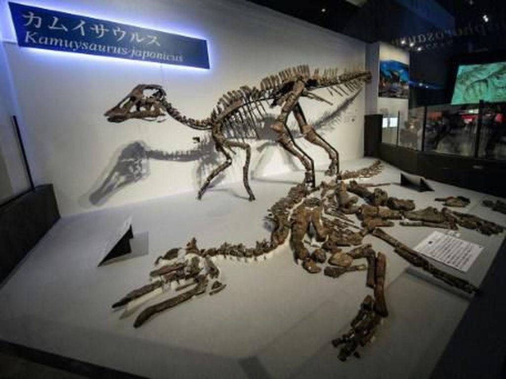 Dewa Naga, Spesies Baru Dinosaurus Ditemukan di Jepang