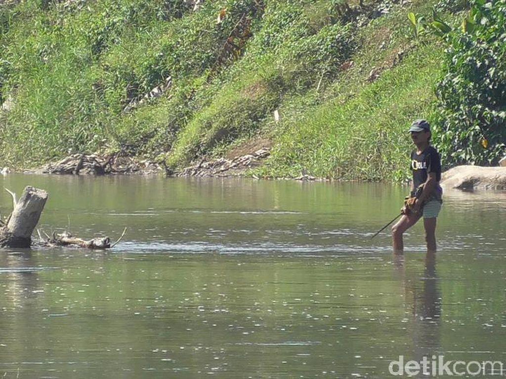 Buaya Besar Satroni Sungai Maloso, Penambang Pasir Resah