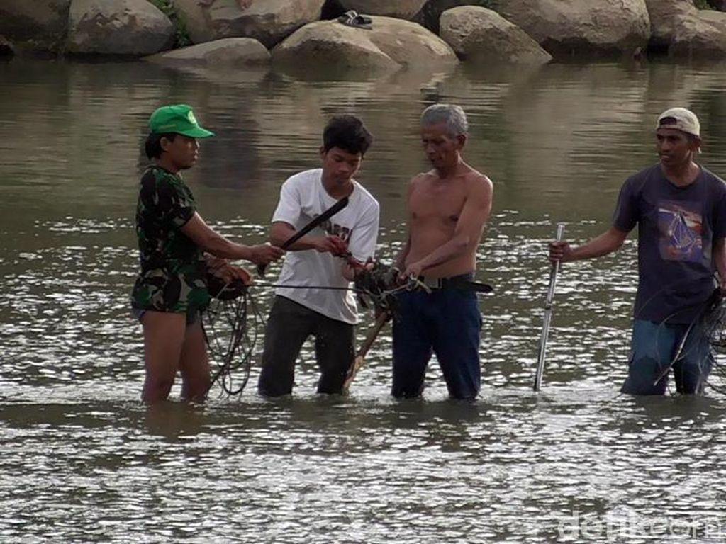 Usir Buaya yang Bikin Resah, Warga Polewali Terjun ke Sungai