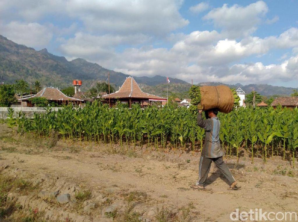 Bagaimana Cara Desa Bisa Bangkit Lagi Usai Diterjang Corona?
