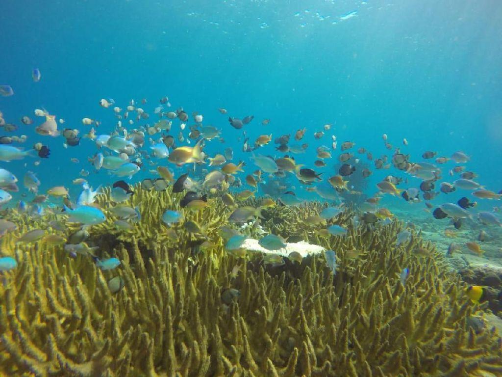 Mungkin Ini Spot Snorkeling Terbaik dari NTB
