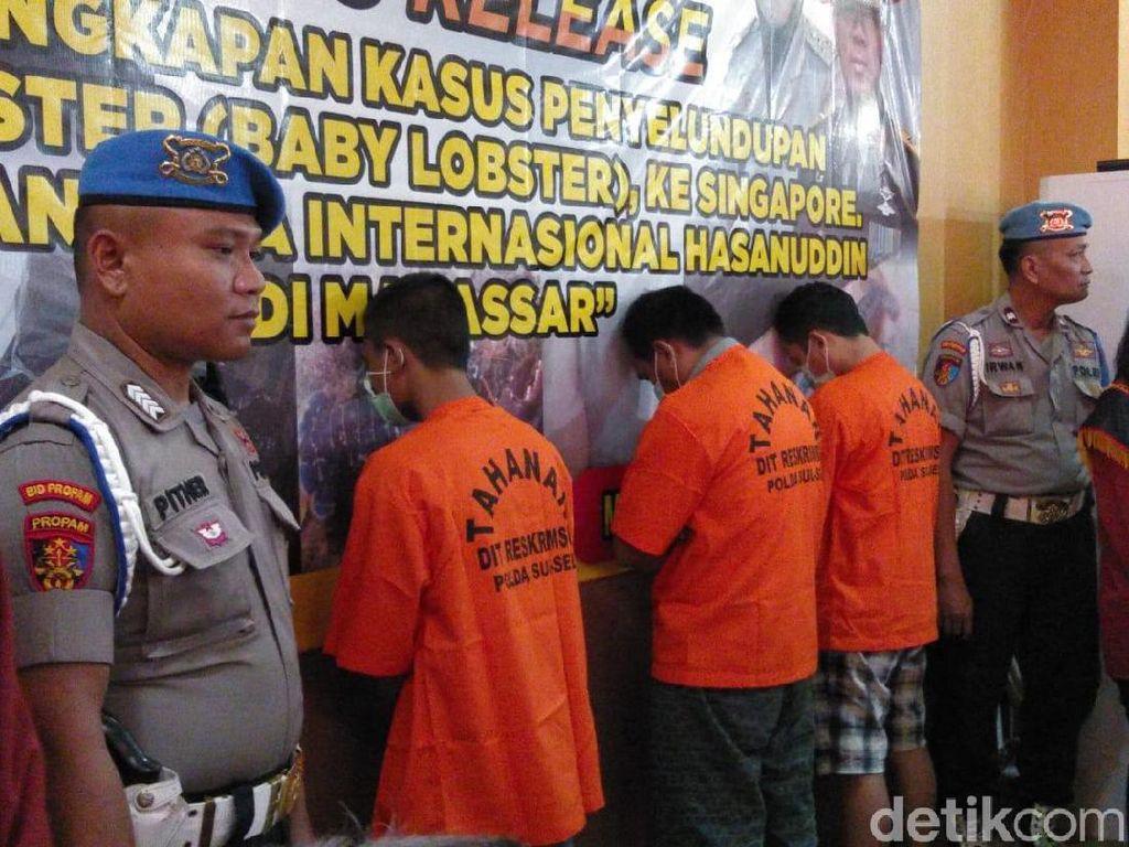 Penyelundupan 19.253 Benih Lobster Tujuan Singapura Digagalkan di Makassar