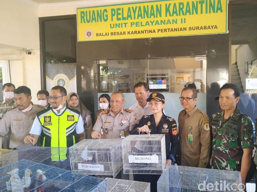 Penyelundupan 74 Ekor Burung Dilindungi Berhasil Digagalkan