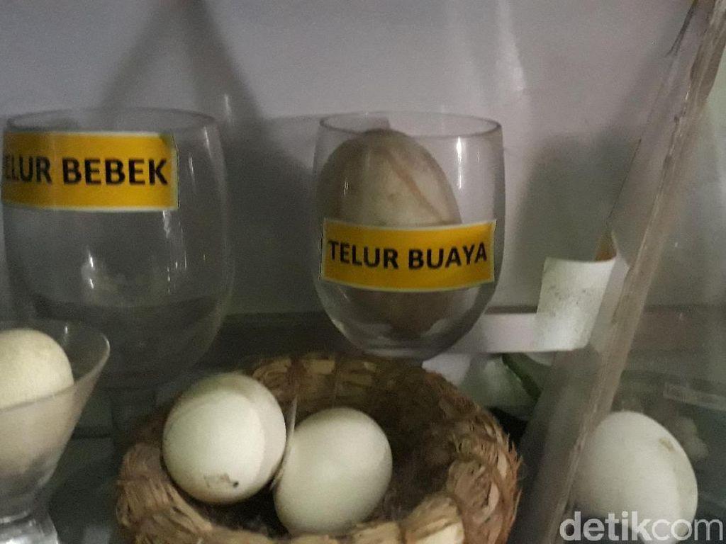 Beda! Pria Brebes Ini Koleksi Ratusan Telur Berbagai Jenis Hewan