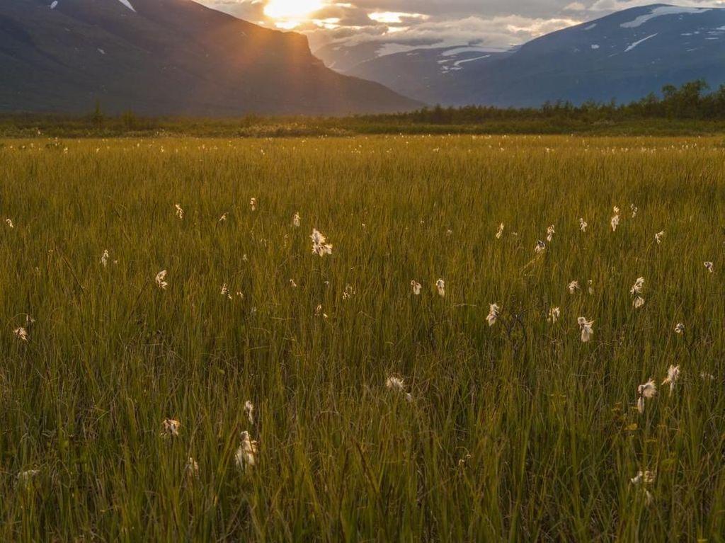 Potret Cantik Lanskap Gunung Swedia yang Ketinggiannya Terus Menurun