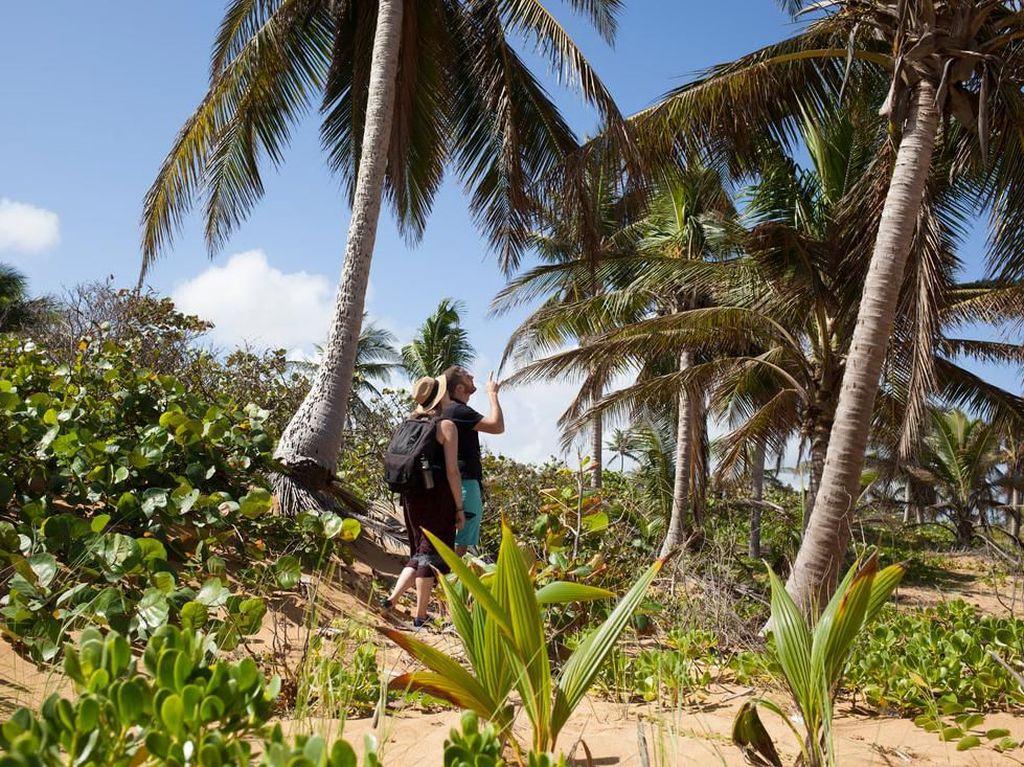 Di Tur Kelapa Ini, Bisa Belajar Bertahan Hidup dan Makan di Alam Bebas