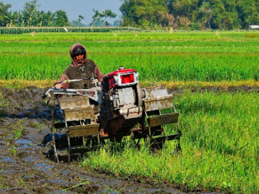 Indonesia Masuk 5 Besar Eksportir Pertanian Terbaik di Dunia