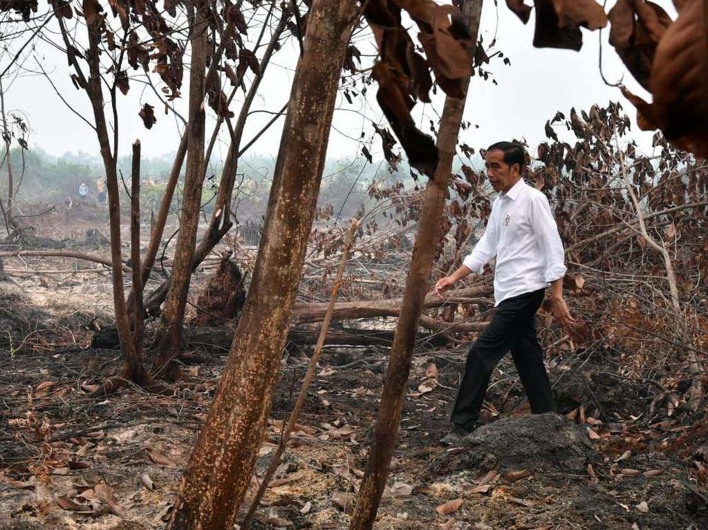 Jokowi Cek Kebakaran Hutan di Riau, Begini Kondisinya
