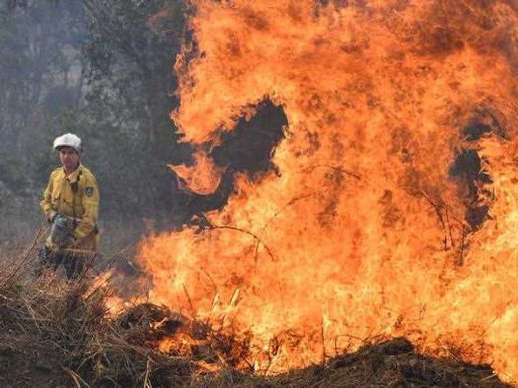Belajar dari Cara Australia Atasi Kebakaran Hutan Tanpa Air