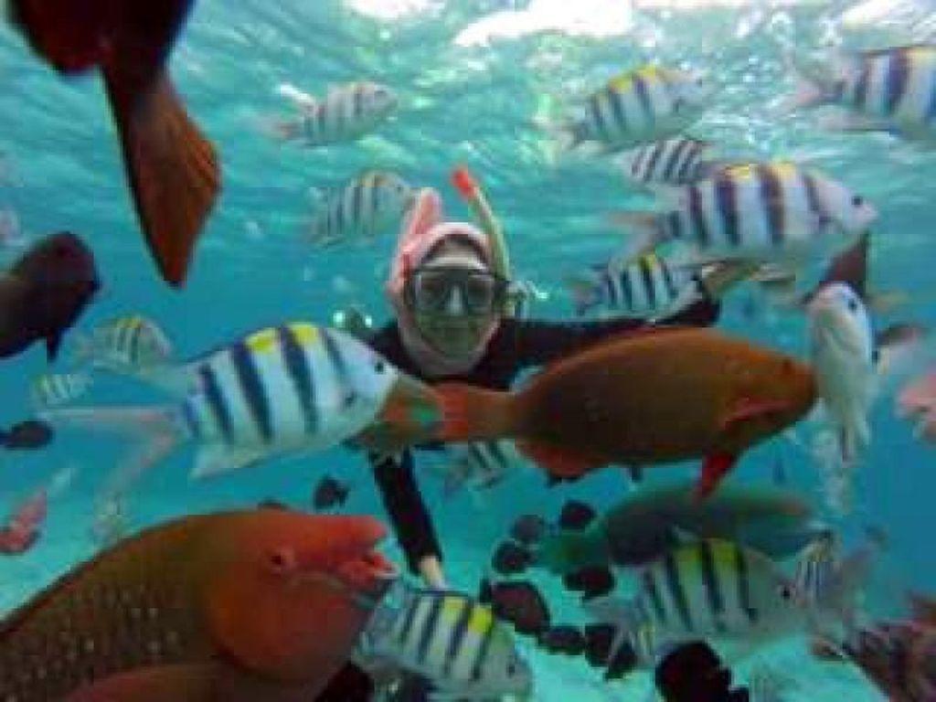 Selfie Bareng Ikan-ikan Cantik Pulau Rubiah, Bikin Kangen