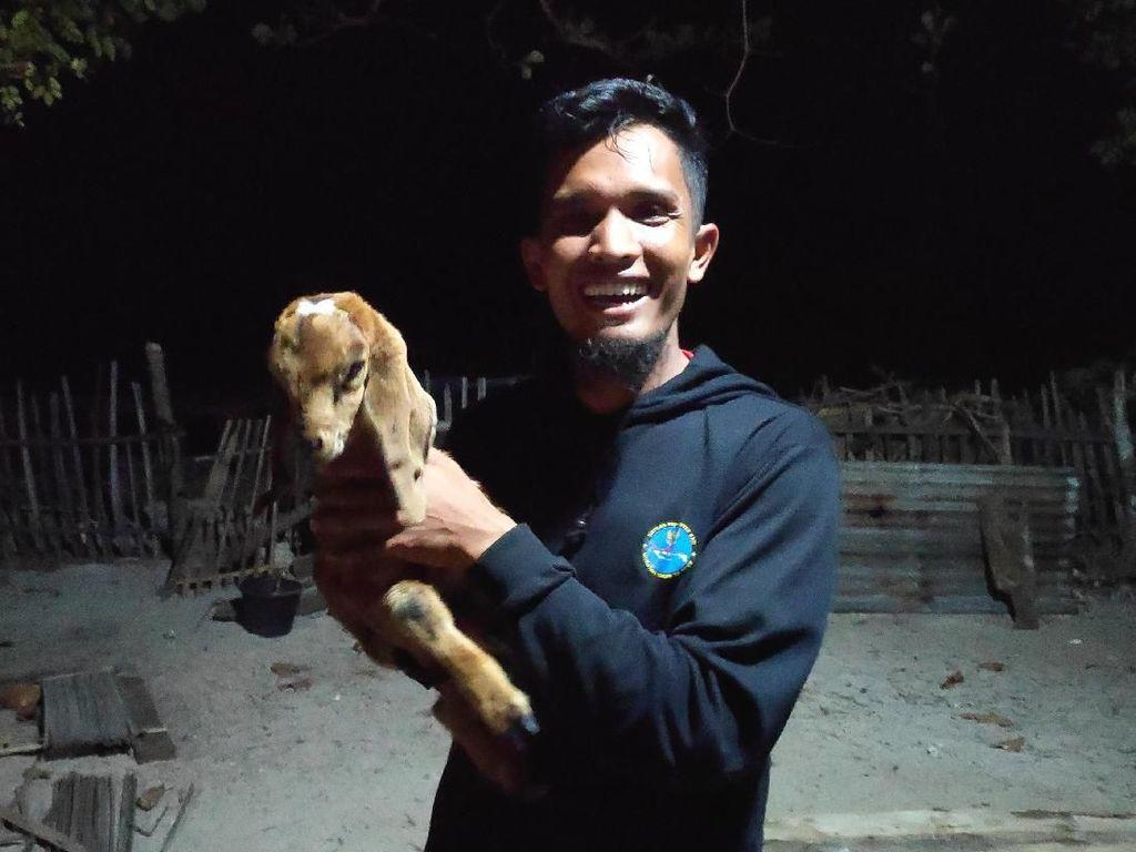 Cerita Persahabatan Kambing dan Manusia di Pulau Paling Selatan RI