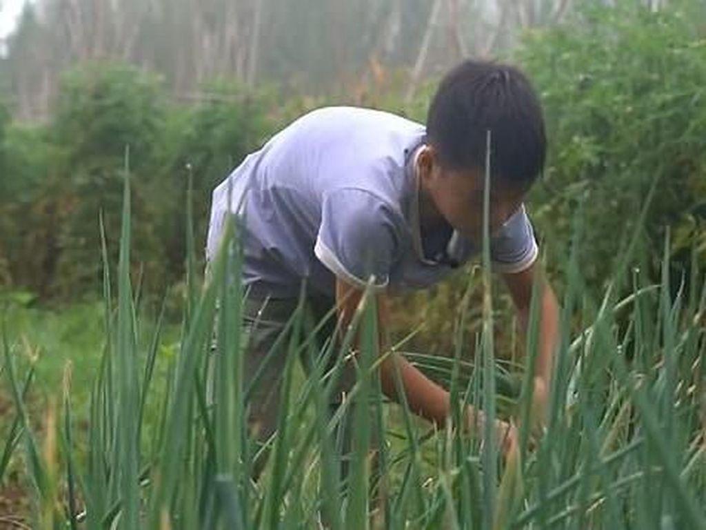 Kisah Bocah 11 Tahun Jual Sayur Sebelum Sekolah untuk Biaya Pengobatan Adik