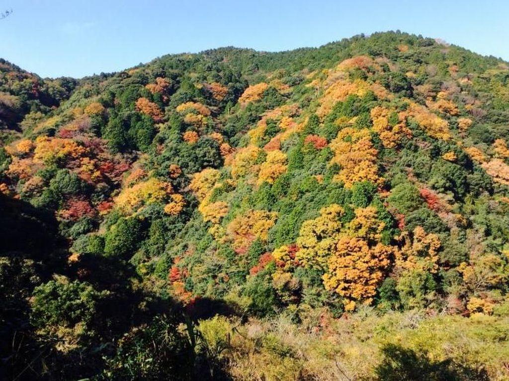 Musim Gugur yang Penuh Warna di Jepang