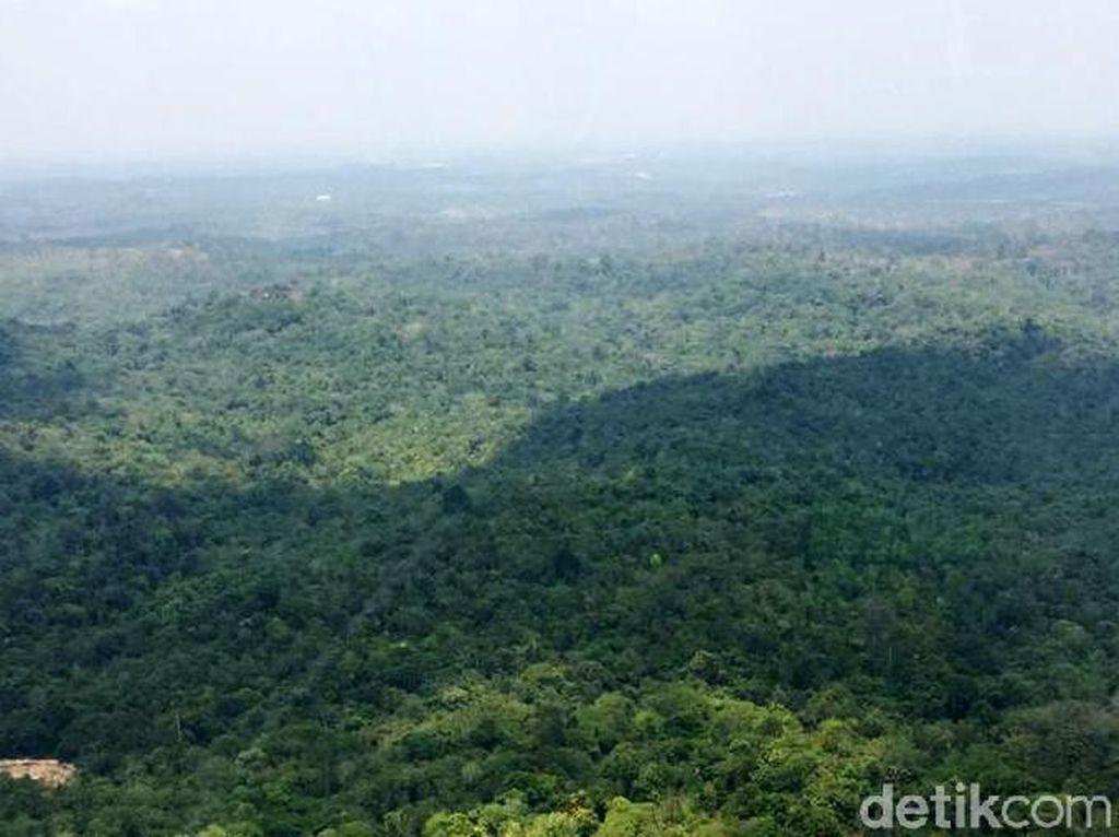 Jaminan Pemerintah soal Nasib Warga dan Hutan Kaltim Bila Ibu Kota Pindah