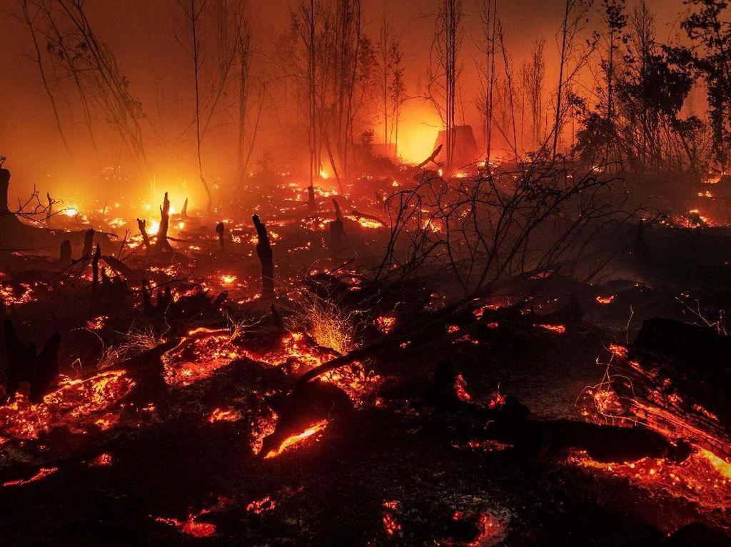 Potret Api Membara yang Hanguskan Hutan Kalimantan