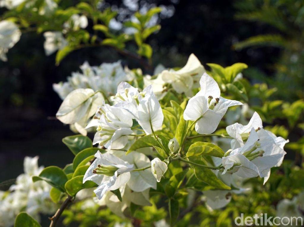 Foto: Taman Bunga Cantik di Jantung Ibu Kota Baru