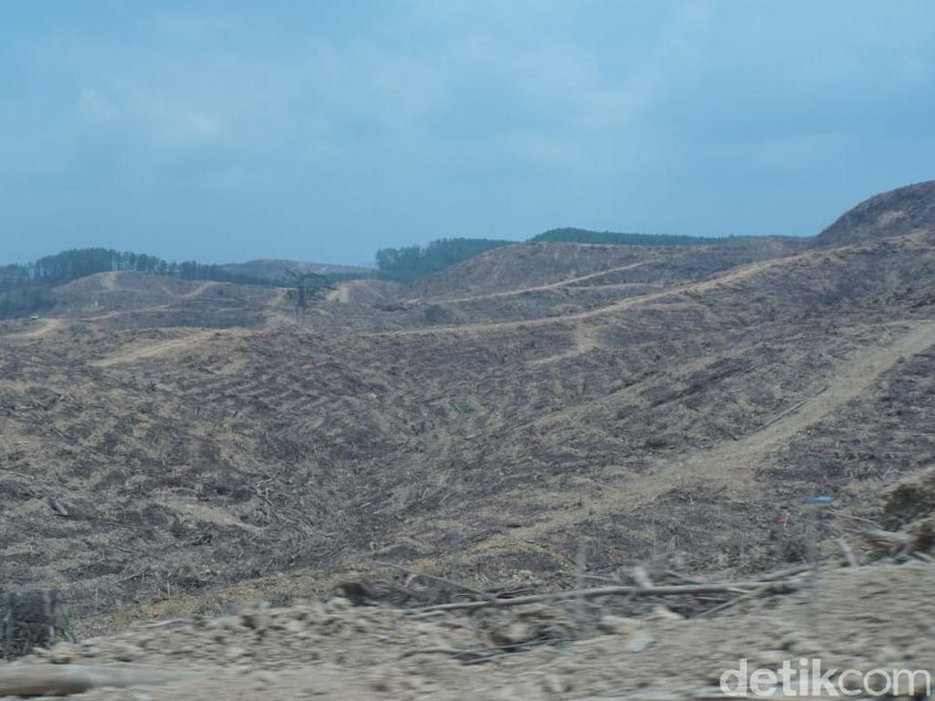 Menapaki Langkah ke Hutan Industri, Lokasi Calon Ibu Kota RI