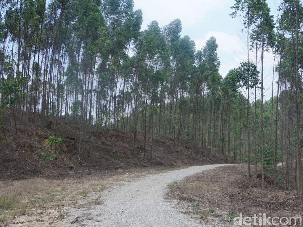 Area Hutan Buat Ibu Kota Baru Siap Dipakai Desember 2019