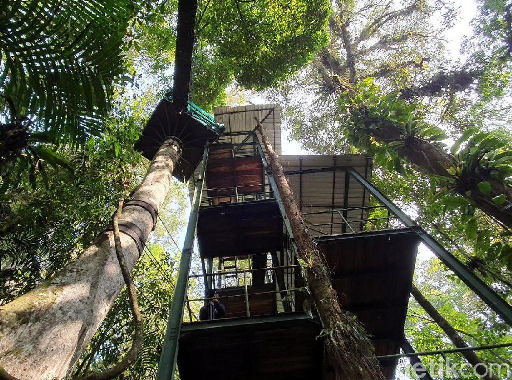 Foto Kanopi di Atap Hutan, Hanya 3 Jam dari Jakarta