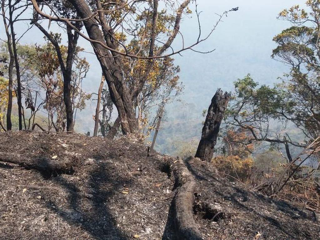 Kebakaran di Gunung Slamet Masuk Kawasan Hutan Lindung Perhutani