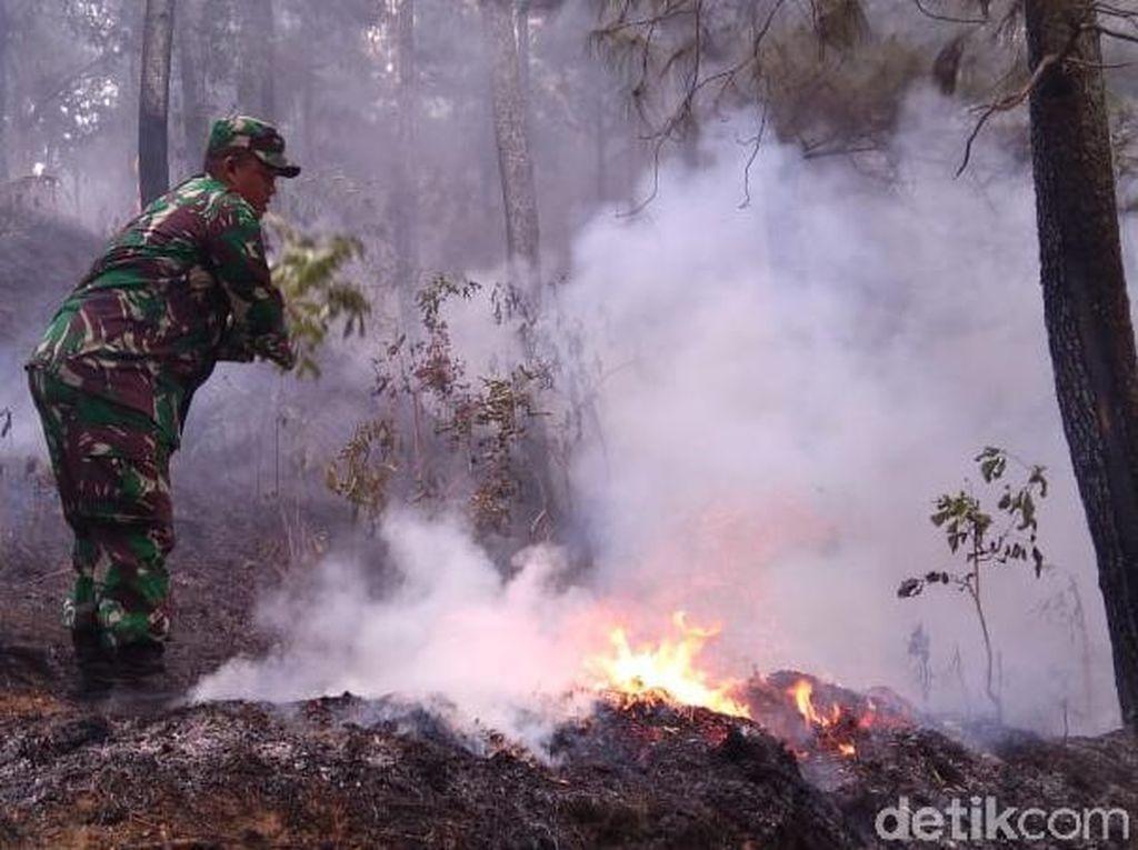 Masuki Hari ke-6, Hutan di Lereng Gunung Slamet Masih Terbakar
