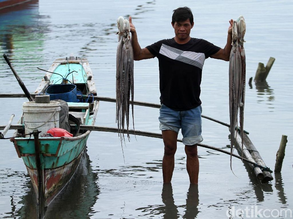 Tak Hanya Lobster, Simeulue Juga Penghasil Gurita