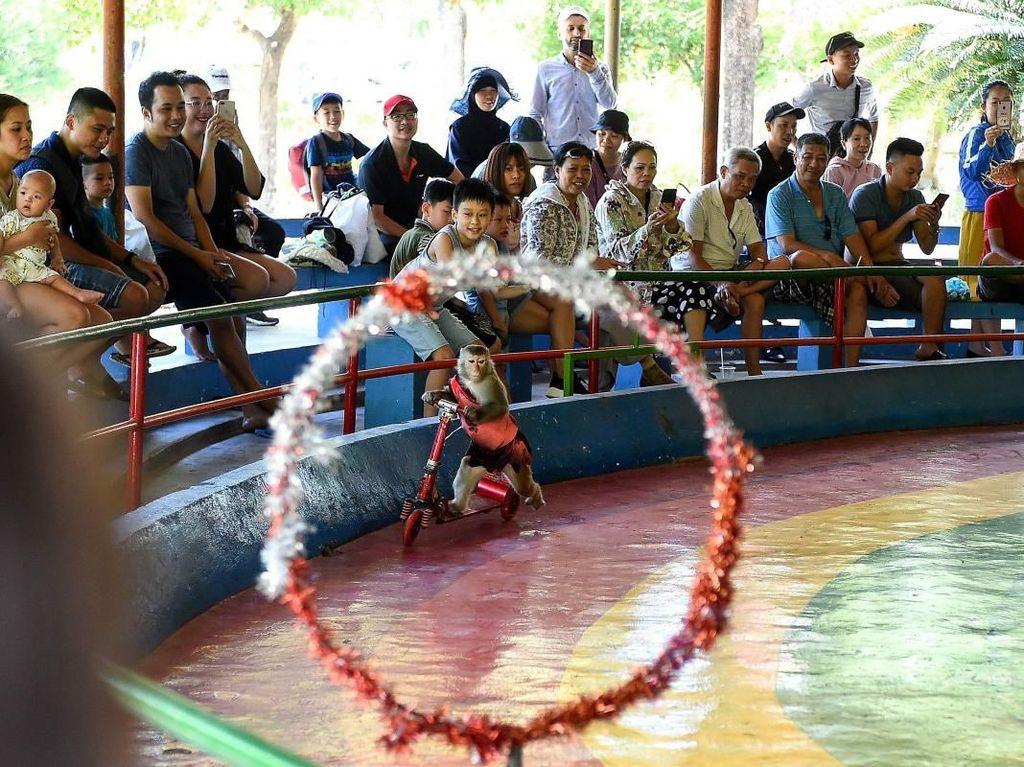Pulau Topeng Monyet Vietnam Dikritik Aktivis