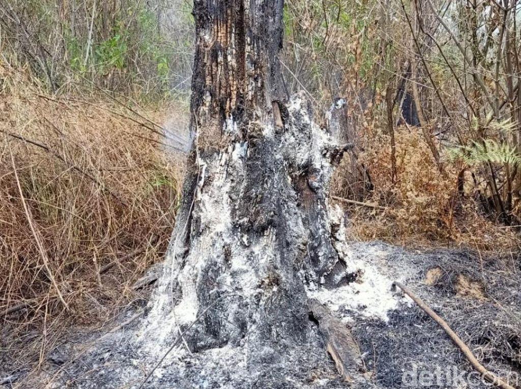 Pemburu Liar yang Bikin Kebakaran di Gunung Arjuno Sulit Ditangkap, Mengapa?
