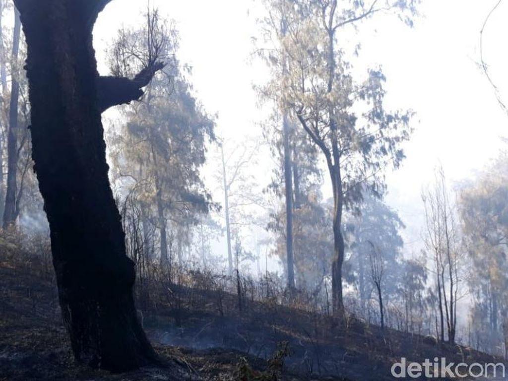 Kebakaran di Konservasi Gunung Arjuno-Welirang karena Aktivitas Ilegal