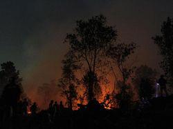 Gubernur Riau Tetapkan Siaga Darurat Karhutla hingga Oktober 2020