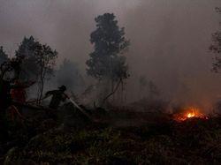 Guru SD Jadi Tersangka Pembakar Lahan di Rohil Riau