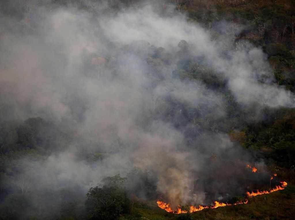 Kebakaran Amazon, Brasil Tangkap 63 Orang dan Jatuhkan Denda Rp 120 M