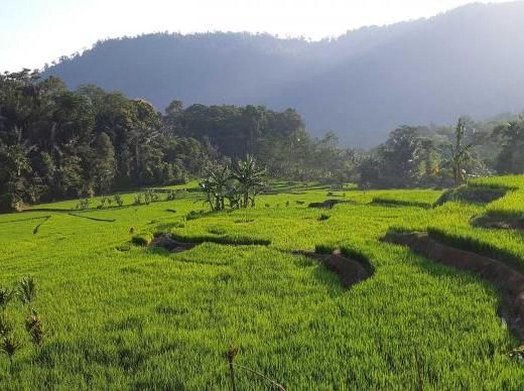 Yang Hijau dan Segar di Garut Selatan: Kampung Saparantu