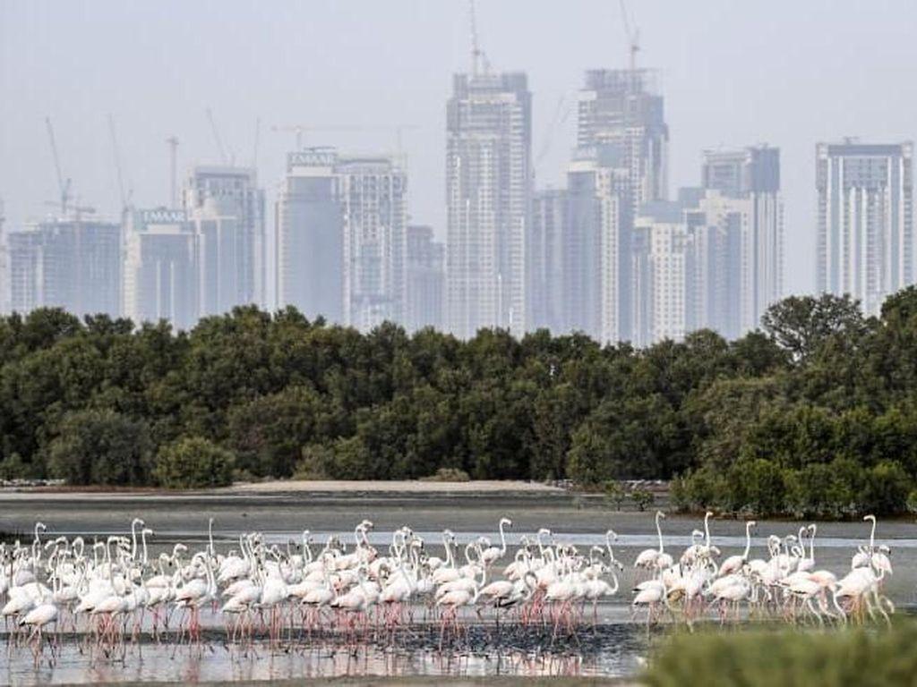 Dubai Ingin Hijaukan Padang Pasir untuk Jadi Destinasi Wisata