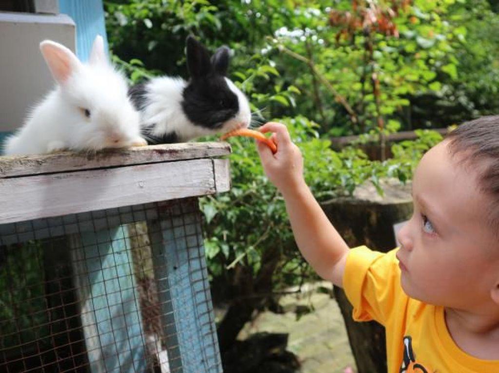 Ini 4 Tempat di Lembang yang Punya Wisata Kelinci