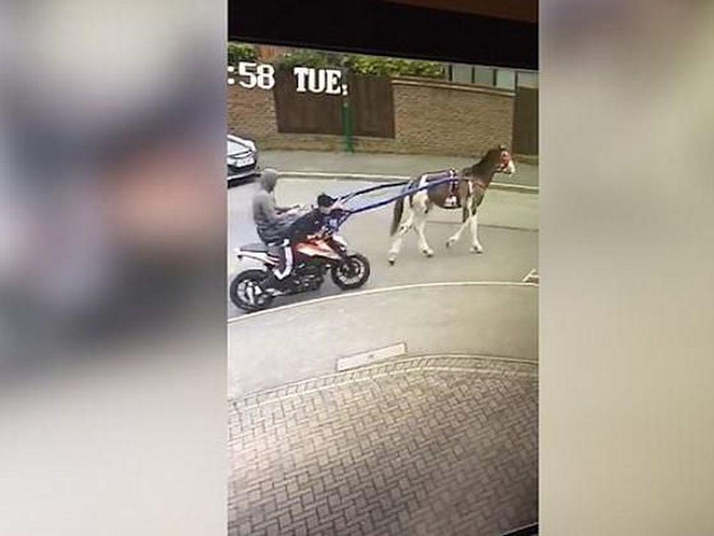 Waduh, Maling Pakai Kuda Untuk Curi Motor