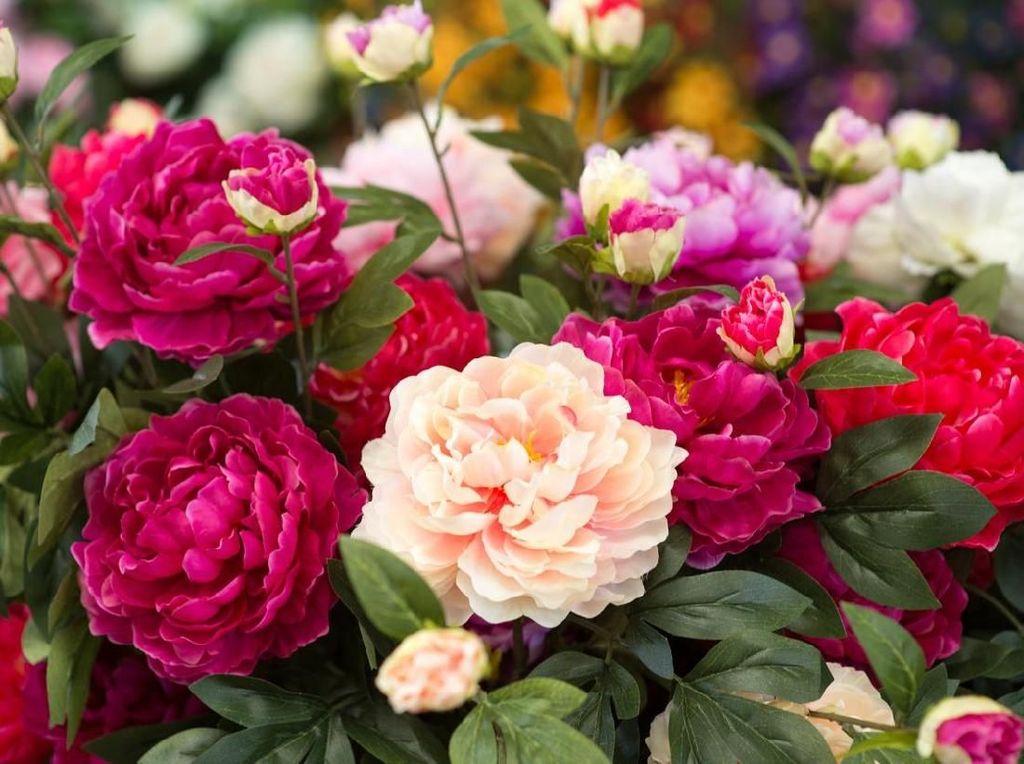 Makna Bunga Peony, Lambang Cinta Selain Mawar