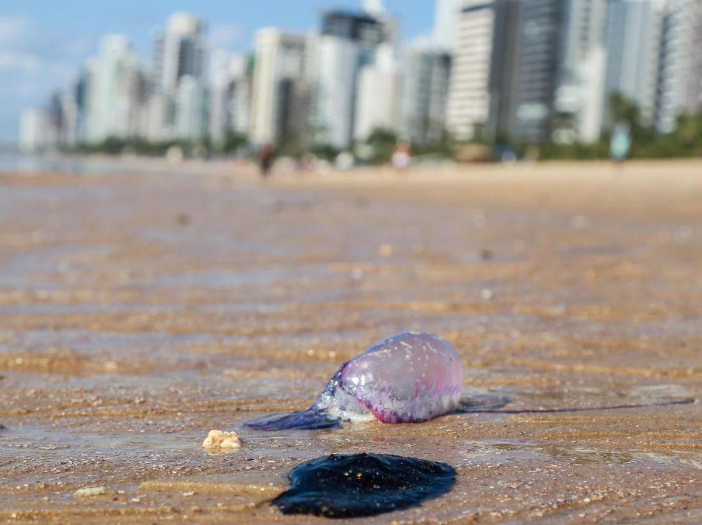 Tumpahan Minyak Misterius Cemari Pantai-pantai Brasil Sepanjang 3 Ribu Km
