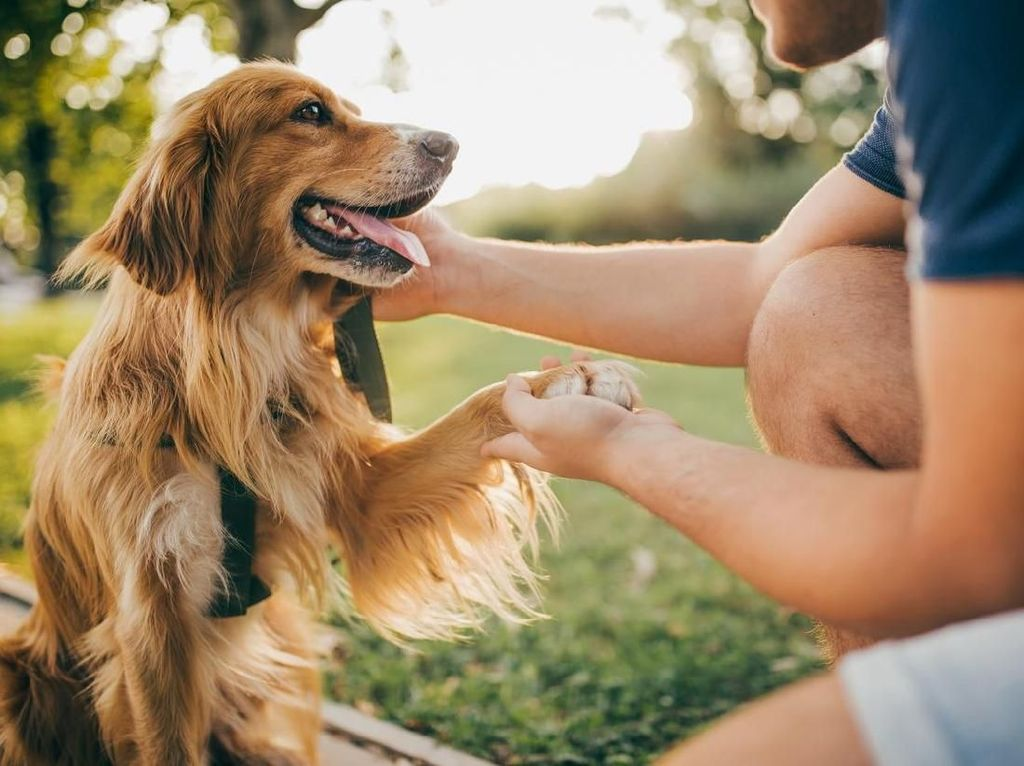 7 Tahun Hilang, Anjing Ini Berhasil Ditemukan Berkat Microchip