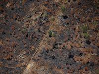 Penampakan dari Udara Sisa Kebakaran Hutan di Kalimantan