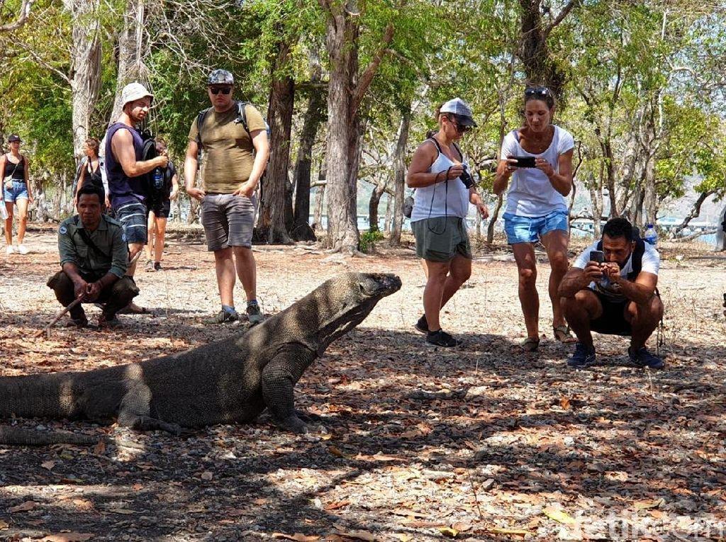 Soal Wacana Tiket Pulau Komodo Naik, Agen Travel Tunggu Edaran