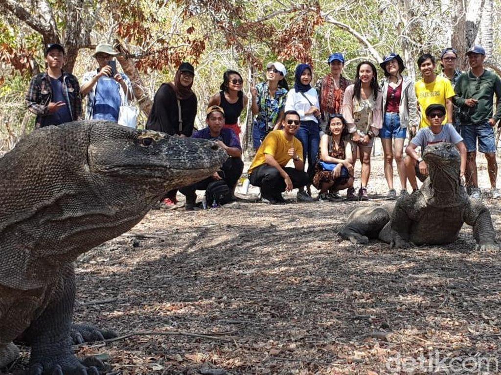 Ini Habitat Naga Purba Selain di Pulau Komodo & Rinca