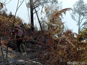 Kebakaran Tahura Gunung Arjuno-Welirang Padam, 100 Hektare Ludes