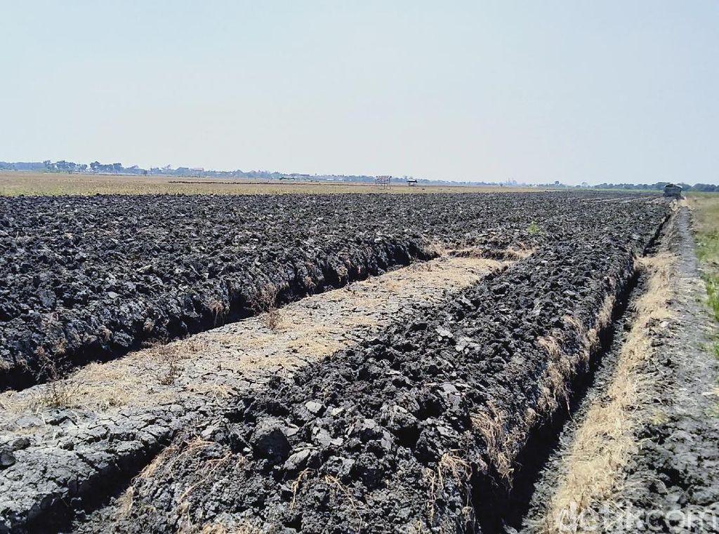1.725 Ha Lahan Pertanian di Demak Kekeringan Tahun Ini