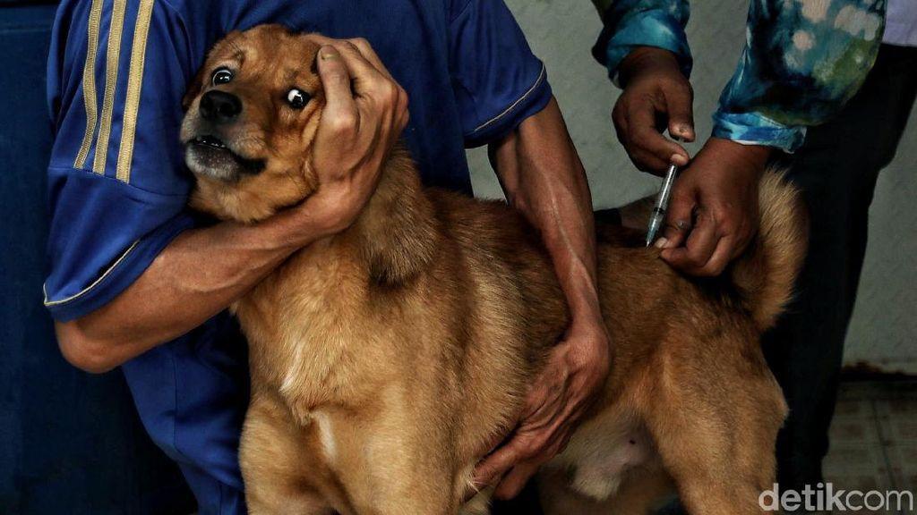 Vaksinasi Rabies Hewan Peliharaan di Jakpus