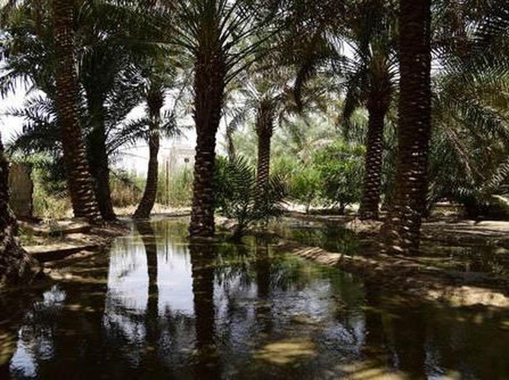 Foto: Oasis Terbesar Dunia di Arab Saudi