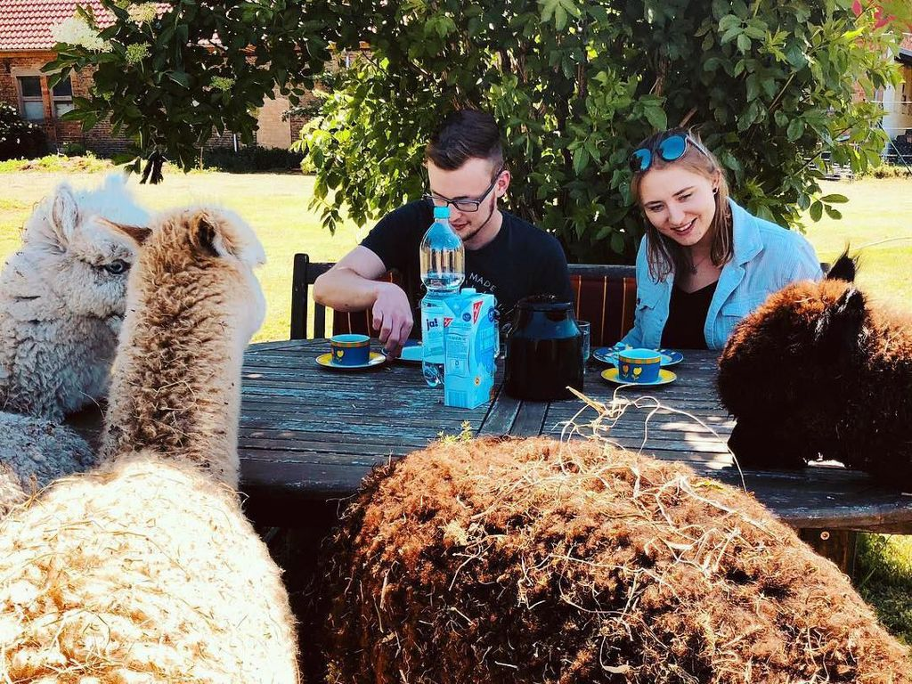 Di Peternakan Ini Bisa Piknik dan Makan Bareng Puluhan Llama Imut